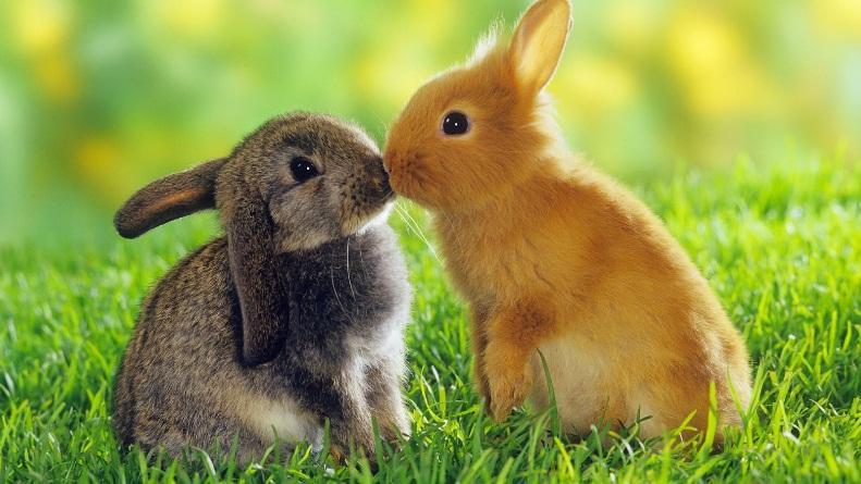 4 điều thú vị bạn chưa biết về loài thỏ