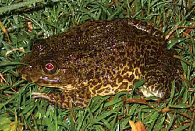 Tiếng ếch kêu mới nhất