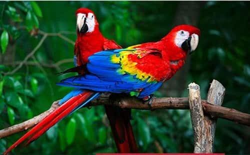 Chia sẻ cách nuôi Vẹt Nam Mỹ, giá cả và nơi bán uy tín