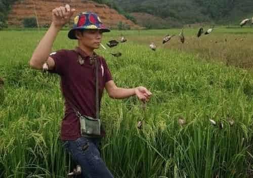 bẫy chim sắc ô bằng lưới
