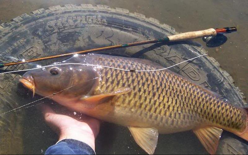cách làm mồi câu cá chép dính sạch sẽ không còn một con