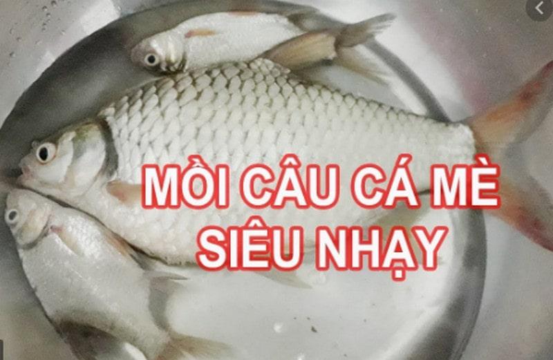 Top 3 cách làm mồi câu cá mè vinh cực nhạy