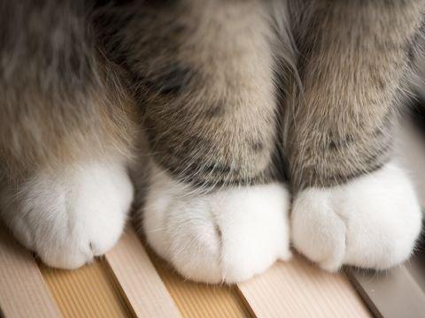 5 sự thật thú vị về loài mèo