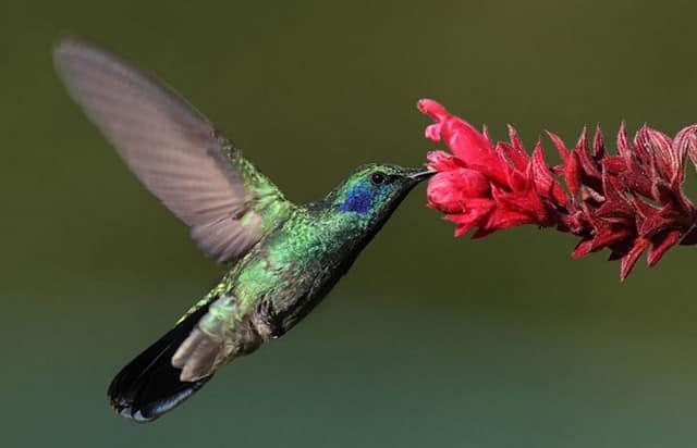 chim đang hút mật hoa