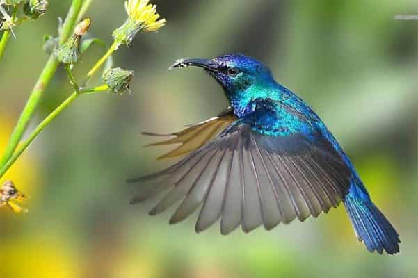 Chim ruồi và những điều khó lý giải được