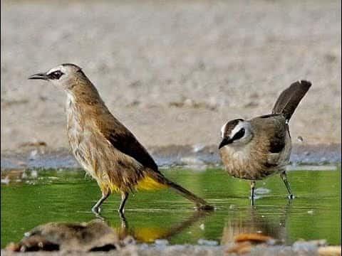 Tiếng chim hoành hoạch, trao trảo hủy diệt mới nhất