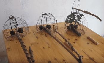 lụp bẫy chim cu vằn